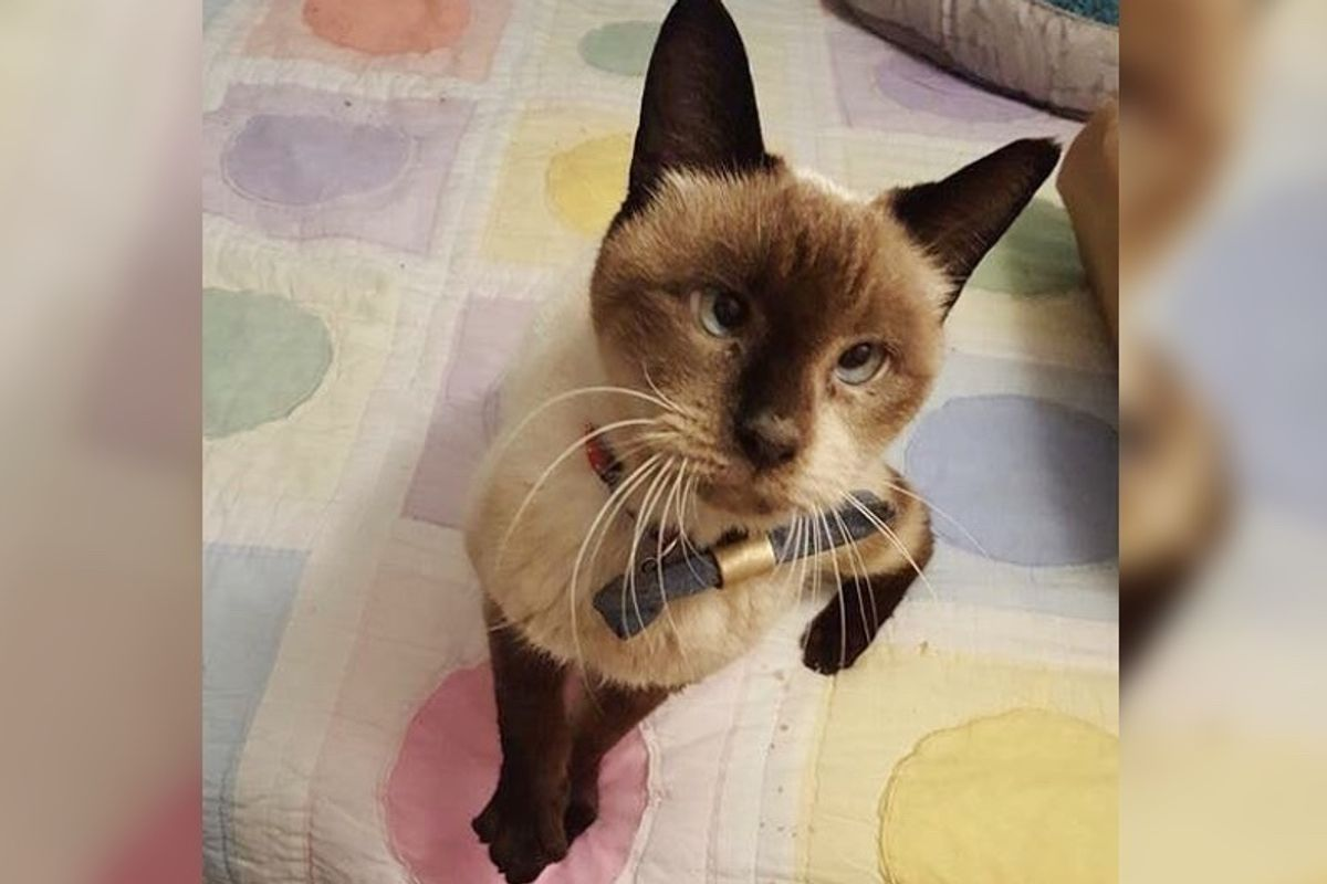 10-year-old Cross-eyed Cat Doesn't Know Why No One Wanted Her But She Continues to Love
