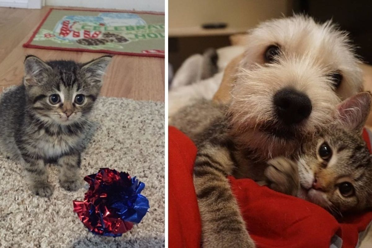 """Special Needs Kitten Finds Love In Unlikely """"Mr. Mom"""" Who Turns His Life Around"""