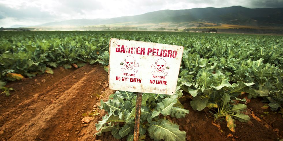 Hold the Plum Pudding: U.S. Food Sampling Shows Troubling Pesticide Residues
