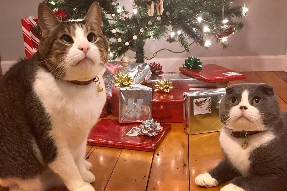 Cross-eyed Cat Finds Brotherly Love in Another Rescue Kitty to Share Christmas With This Year