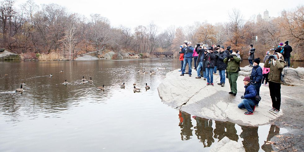 Prime Places to Partake in Audubon's Annual Christmas Bird Count