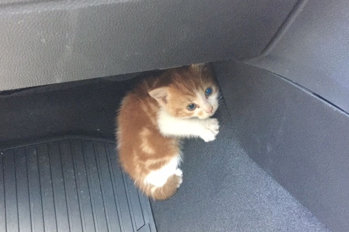 Stray Kitten Found on Highway Was Rescued After Several Hide-and-seek Adventures