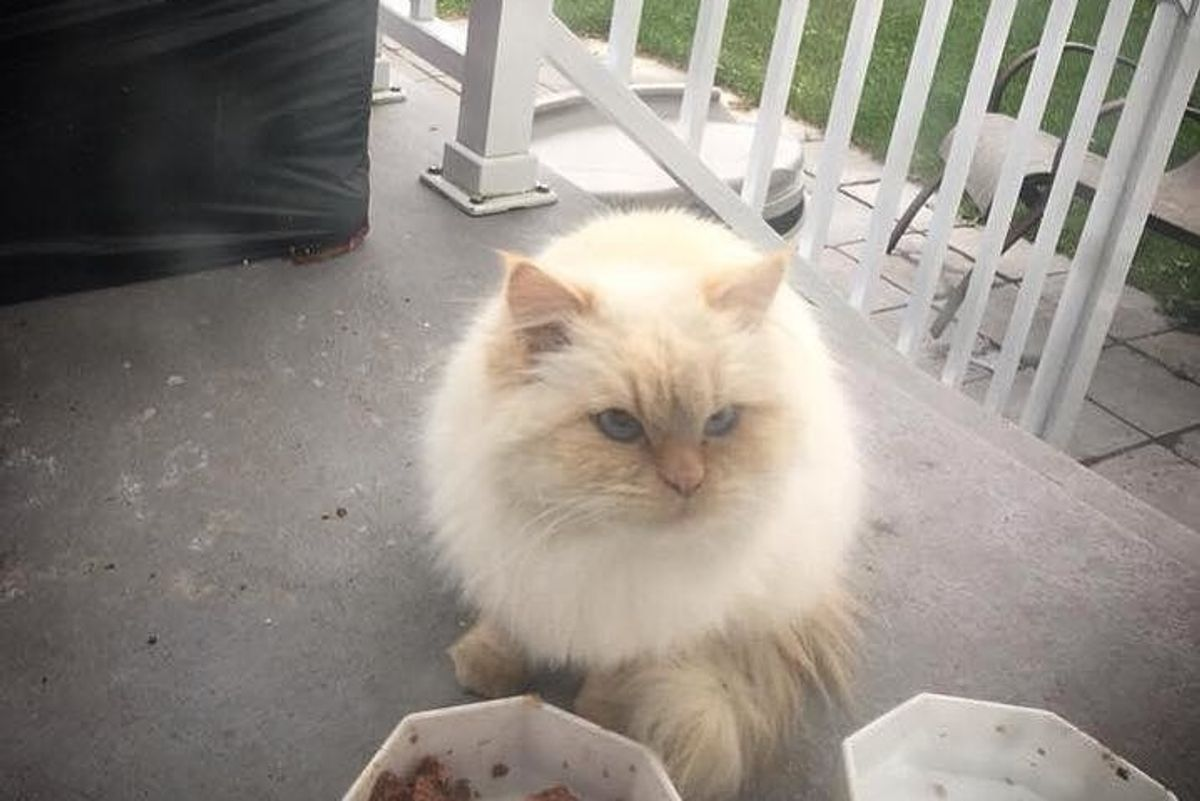 Fluffy Cat Wouldn't Let Anyone Near Her Until Rescuer Gave Her Help She Needed