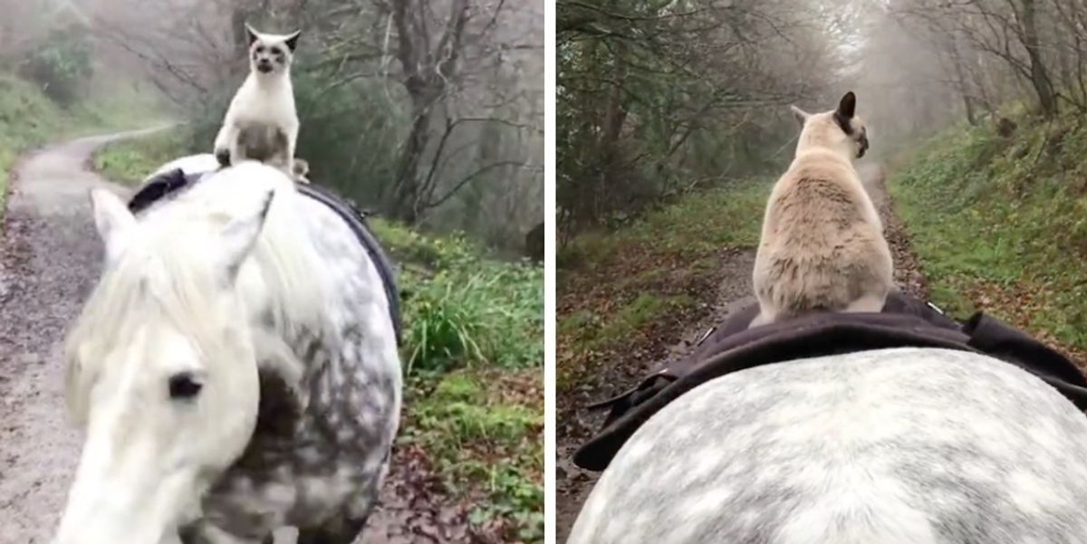 Cat Bonded With Horse and They Explore Places Together Almost Every Day
