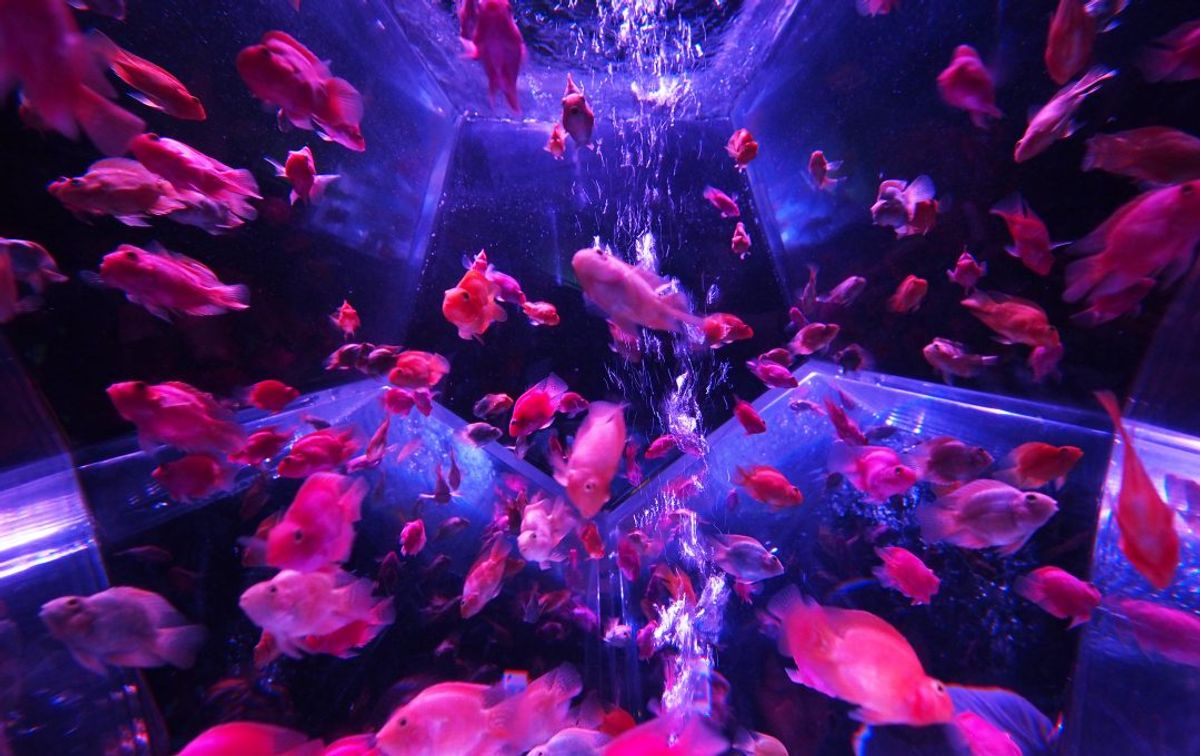 How can owning a fish tank be therapeutic?