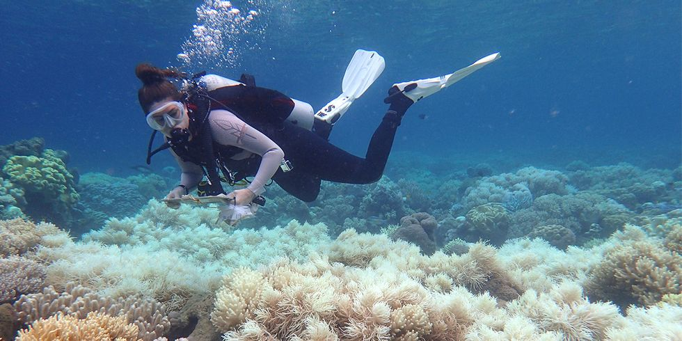 Severe Coral Reef Bleaching Now 'Five Times More Frequent' Than 40 Years Ago