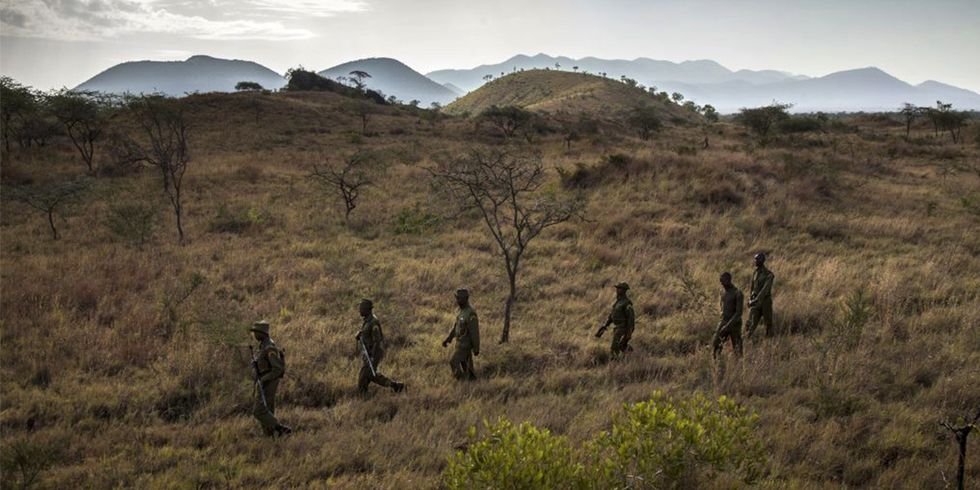 The Most Valued Anti-Poaching Equipment May Surprise You