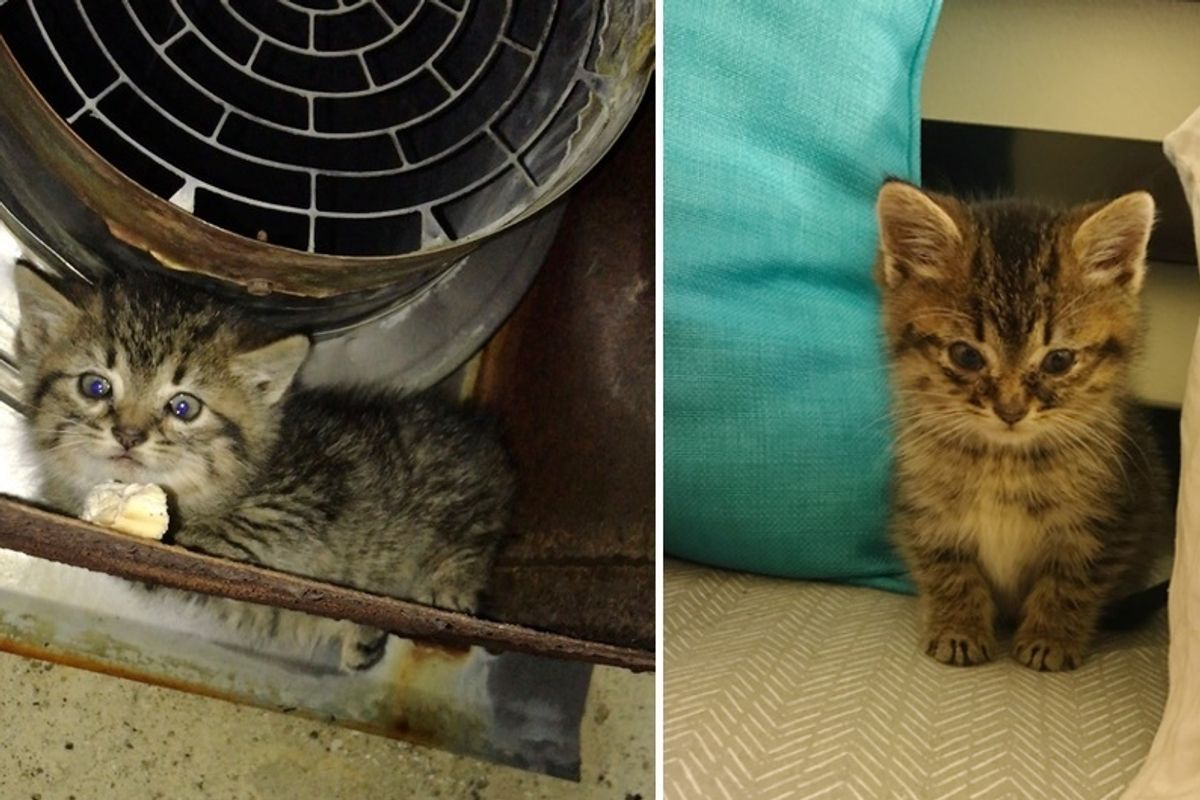 Woman Saved Hissy Kitten Freezing Outside Of Workplace - A Heat Pad and Love Changed Everything
