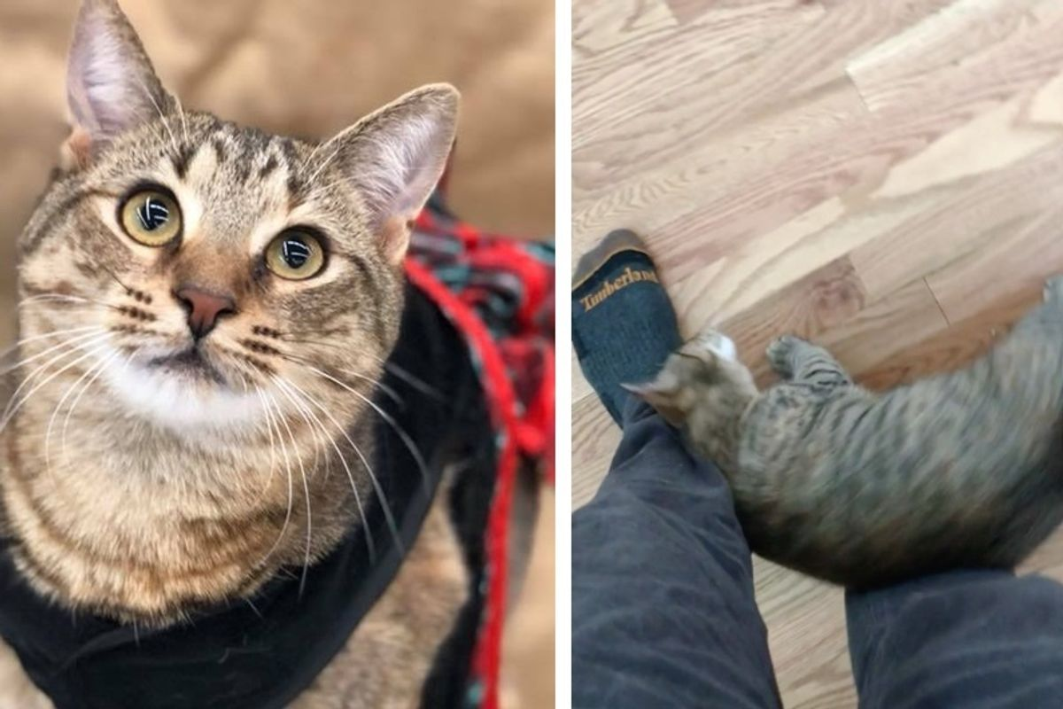 Man Gives Shelter Cat a Home and Now Can't Walk Anywhere Without Her Wanting Love