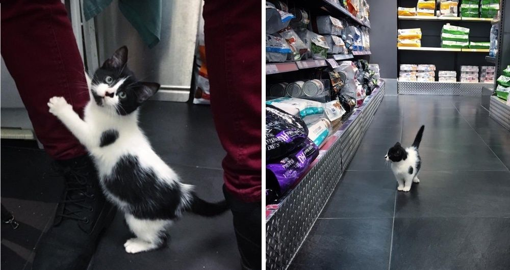 Stray Kitten Scratches Door to Get Help and Decides She Will Run Every Place She Goes to.