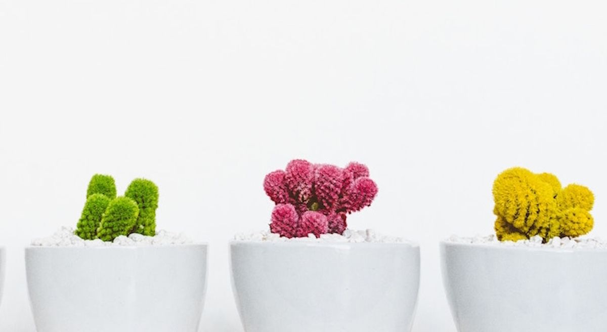 Minimalism And Green Living Are Actually The Same Thing