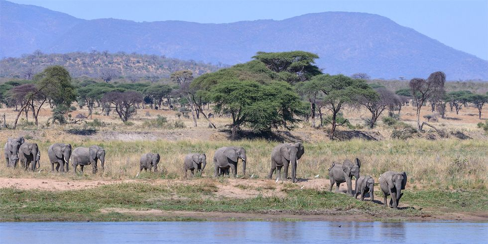 Will Tanzania Save the Great Ruaha River?