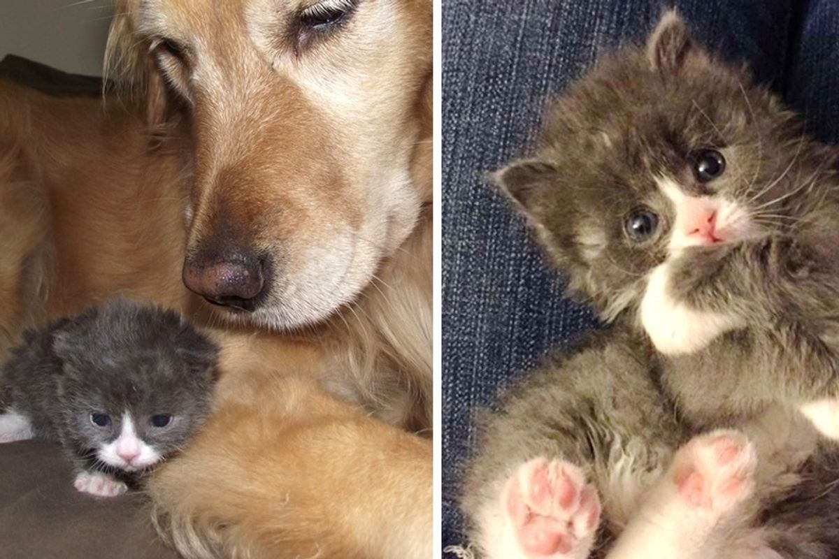 Wobbly Kitten Rejected at Birth, Finds Happiness Through Those Who Believe In Him, Now 2 Years Later.