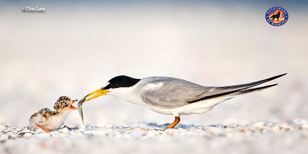 Former DOI Officials Want Zinke to Reconsider Changes to the Migratory Bird Treaty Act