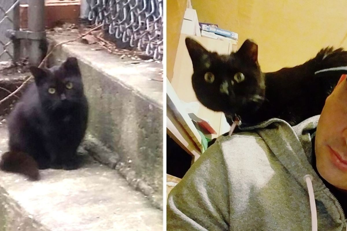 Feral Cat Becomes Man's Shoulder Kitty After Months of Him Trying to Win Her Trust