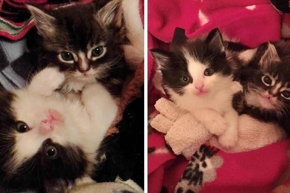 Kittens Given Up By Their Mom, Find Love and Warmth In Big Foster Dog