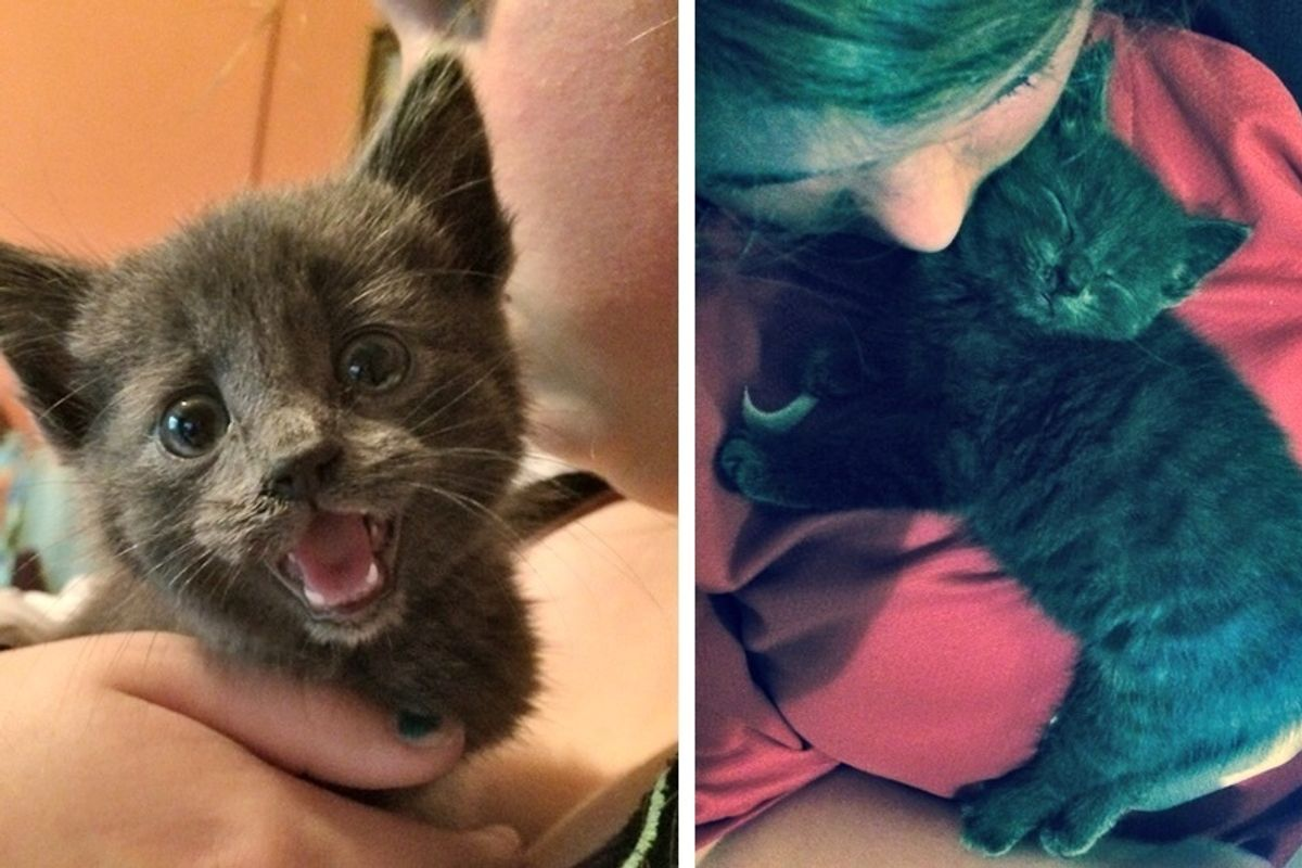 Stray Kitten Found In a Hedge Gets Her First Cuddle and Everything Changes, Now 2 Years Later.
