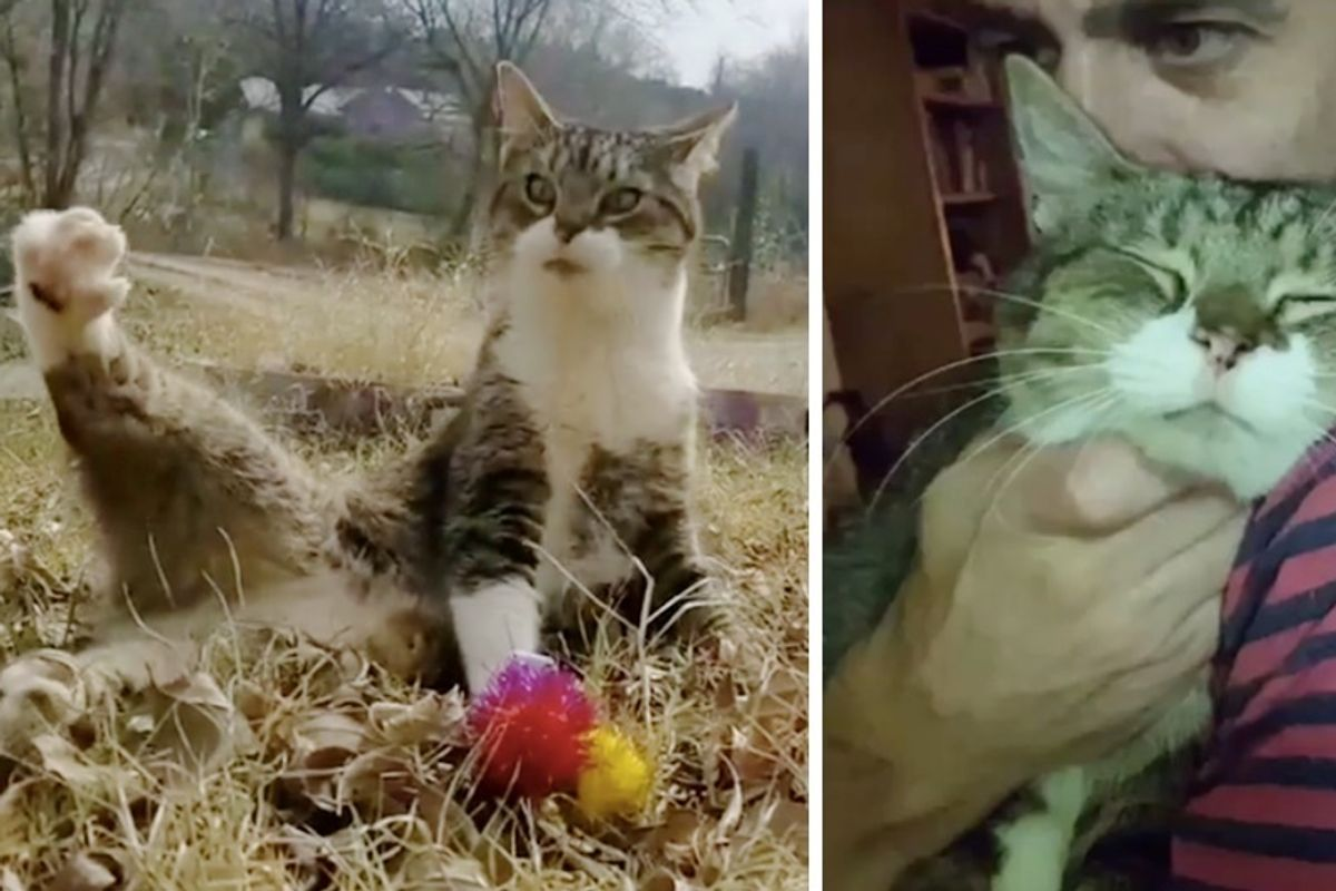 Wobbly Cat Given Up to Shelter Finds Someone Who Loves Him Just the Way He is.