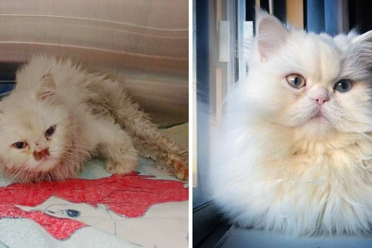 Scraggly Cat Found on the Edge of Highway Gets Her Glorious Fluff Back