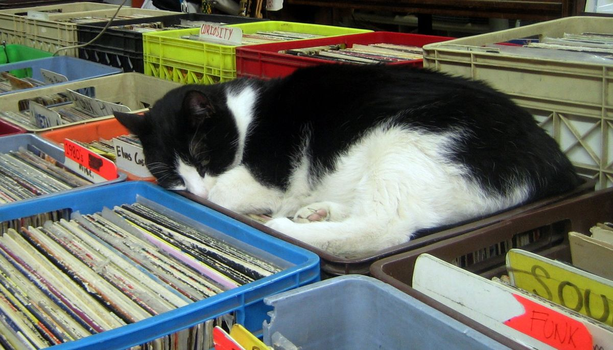 7 Reasons Why Record Collecting Rocks