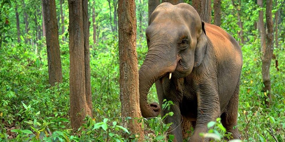 Forest Gardening With Space for Wild Elephants
