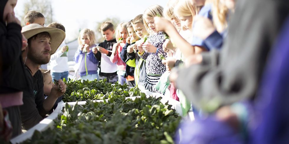Elon Musk's Brother Wants to Bring #RealFood to 100,000 Schools Across America
