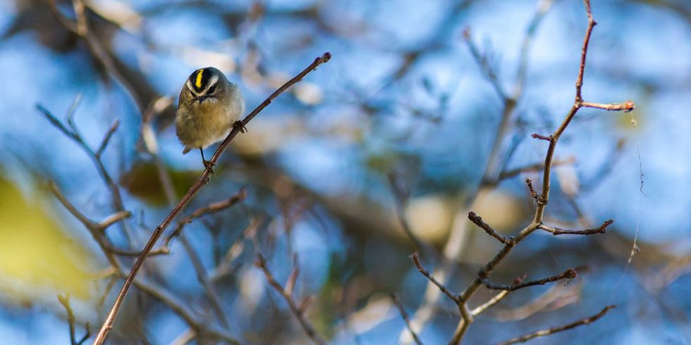 Birders Get a First Look at How 2017 California Wildfires Affected Wildlife