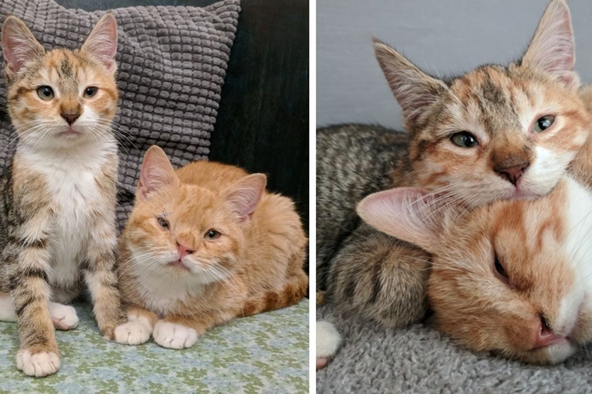 Kitten Comforts Her Shy Brother After They Were Saved From Freezing Weather Out On the Streets