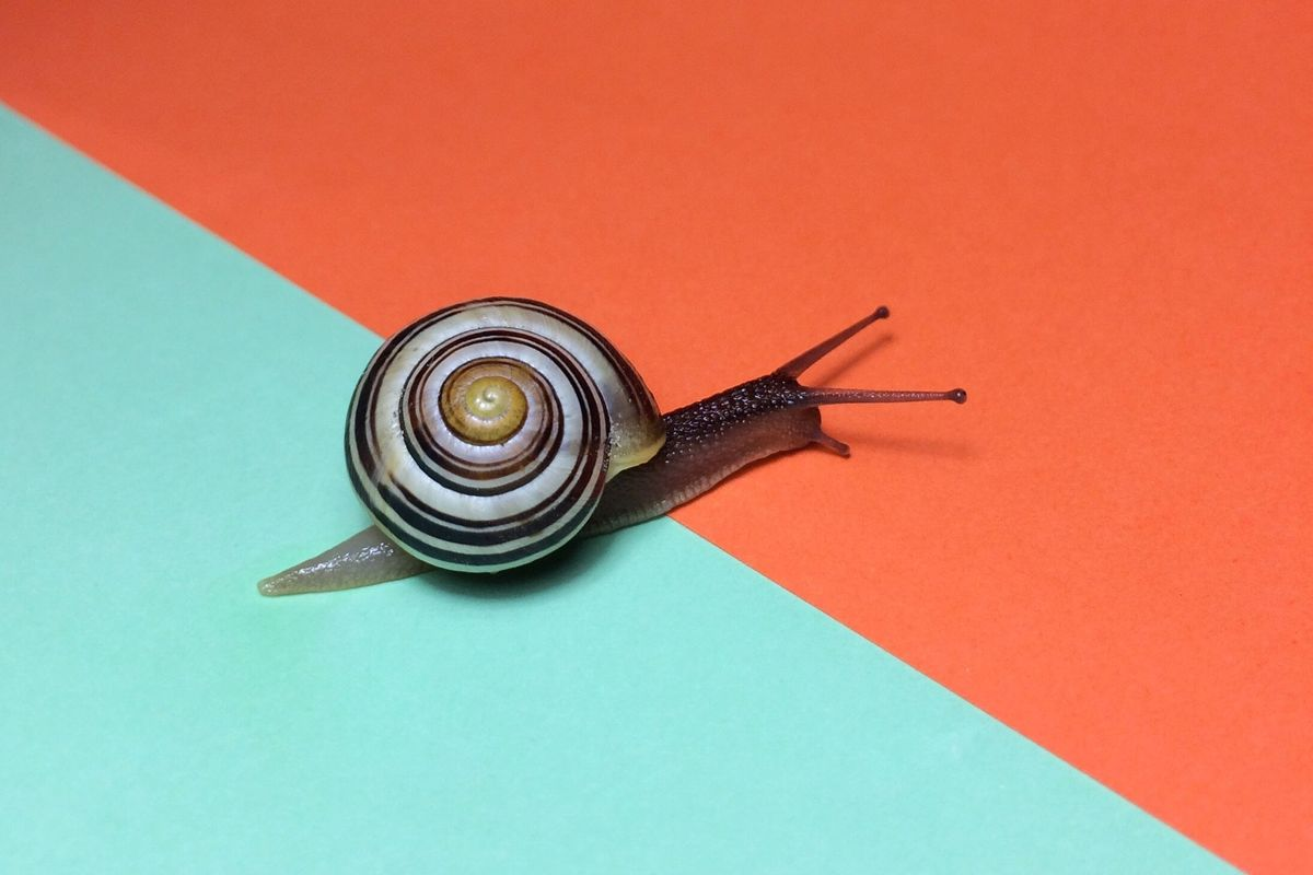 The 10 Best Snail Slime Products for Your Face