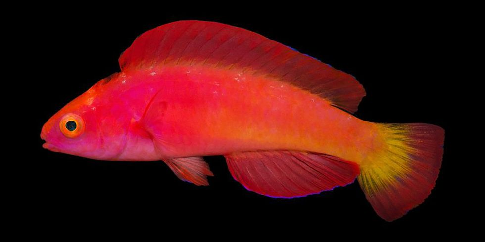 7 Amazing New Fish Species Discovered in 2017