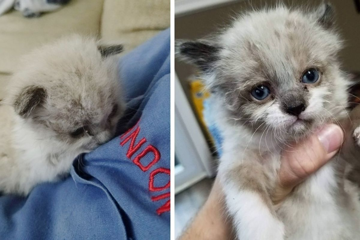 Man Saves Crying Motherless Kitten and Raises Him into Cuddlebug, Now 2 Months Later.