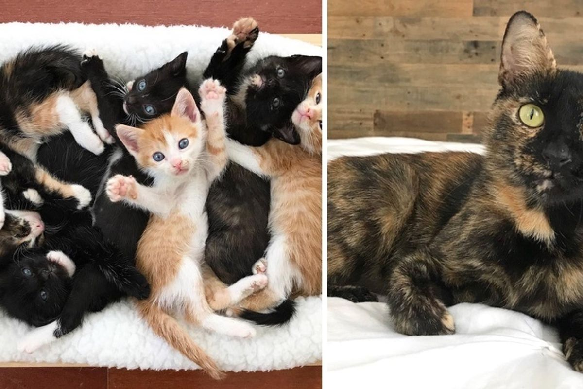 Rescue Cat Mama Gets Help for Her 7 Kittens After Trying to Keep Them All Alive on Her Own