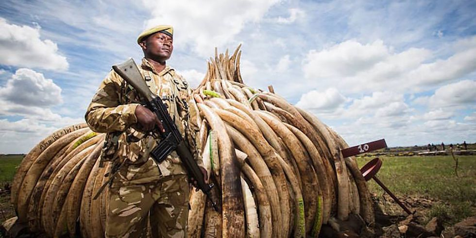 Ivory Trade in China Is Now Banned