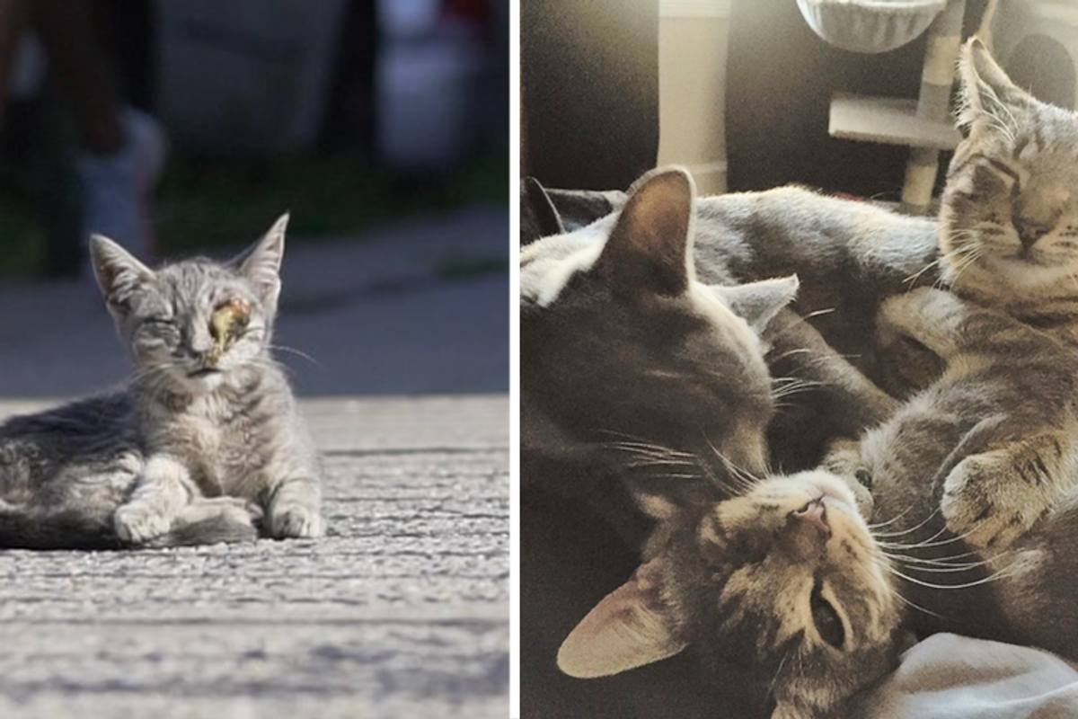 Couple Saved Kitten Sitting on Sidewalk and Went Back to Get Her Siblings While Others Just Pass Them By