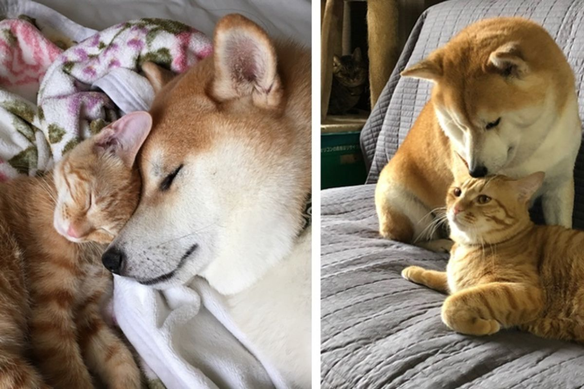 Kitten Who Needed a Home Finds New Brother in a Dog Who Needed a Cat.