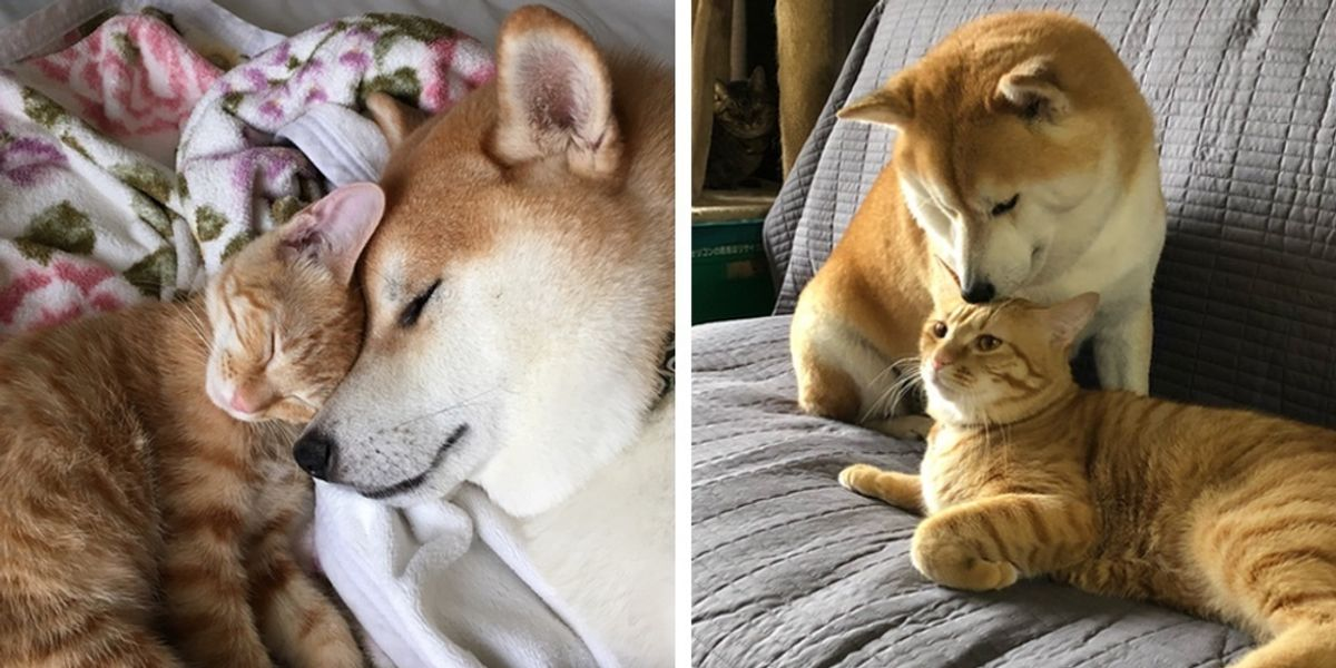 Kitten Who Needed a Home Finds New Brother in a Dog Who Needed a ...