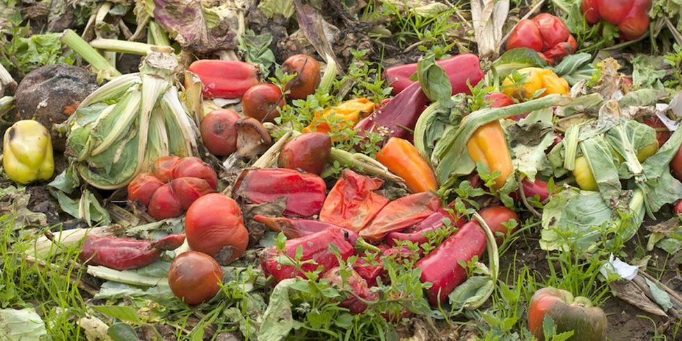 You Can Fight Food Waste With These 4 Apps