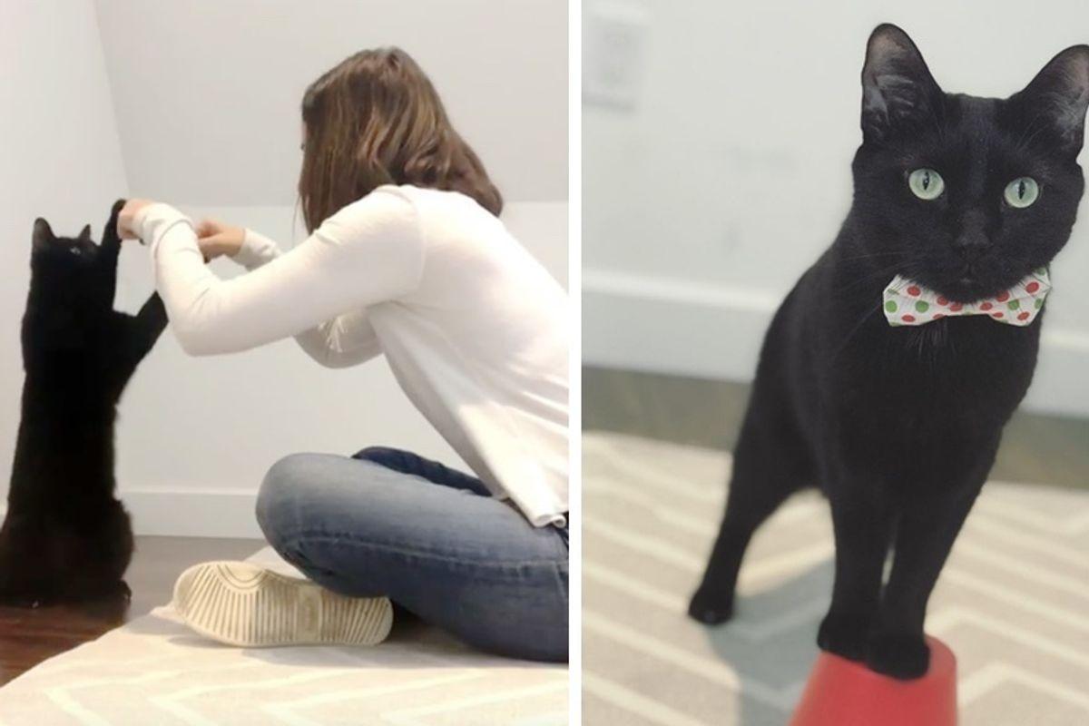 Former Stray Cat Shares Impressive Secret Cat Handshake With His Human.