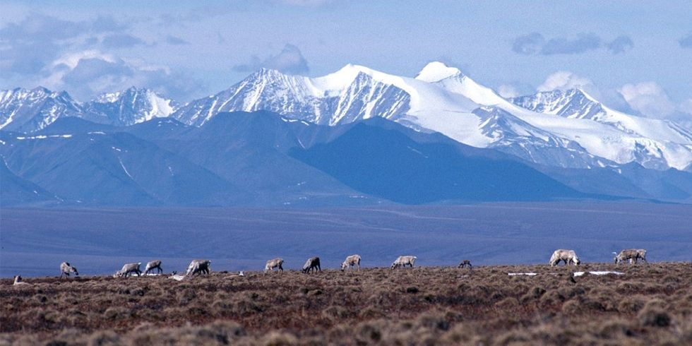Trump: 'I Never Appreciated ANWR' Until Oil Industry Friend Called