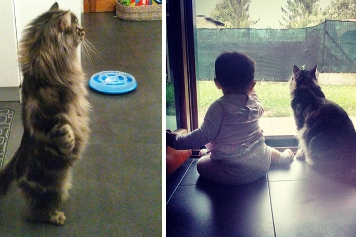 Cat Kept His Baby Sister Safe Before She was Born and Continues to Protect Her.