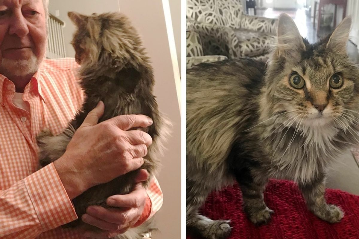 """""""Ten years ago, grandparents agreed to take care of my cat while my family was away... I still haven't gotten him back."""""""