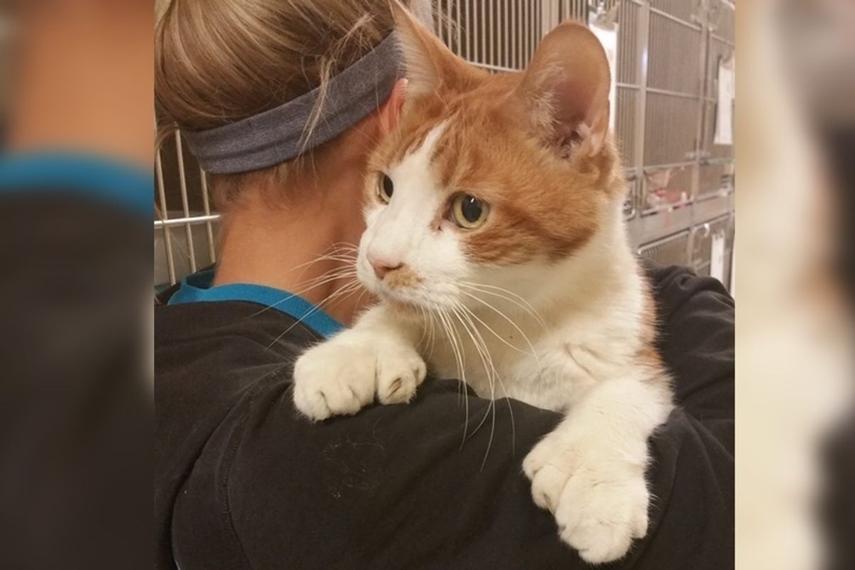 Cat with 24 Toes Came to Shelter and Couldn't Get Enough of Cuddles from Volunteers.