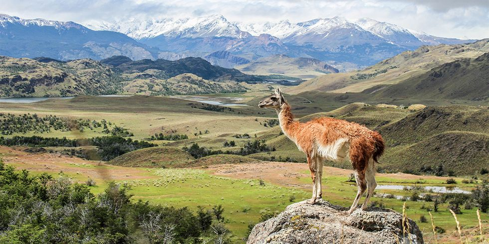 A Wilderness Like No Other: Chile's New Patagonia National Park