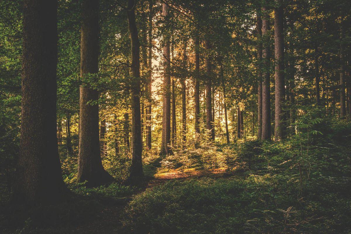 Finish the Story: Woods
