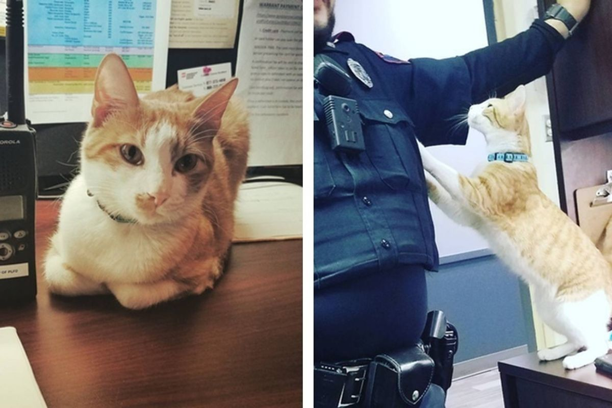 Police Department Recruits a Cat From Shelter to Join Them and Help Keep the City Safe.