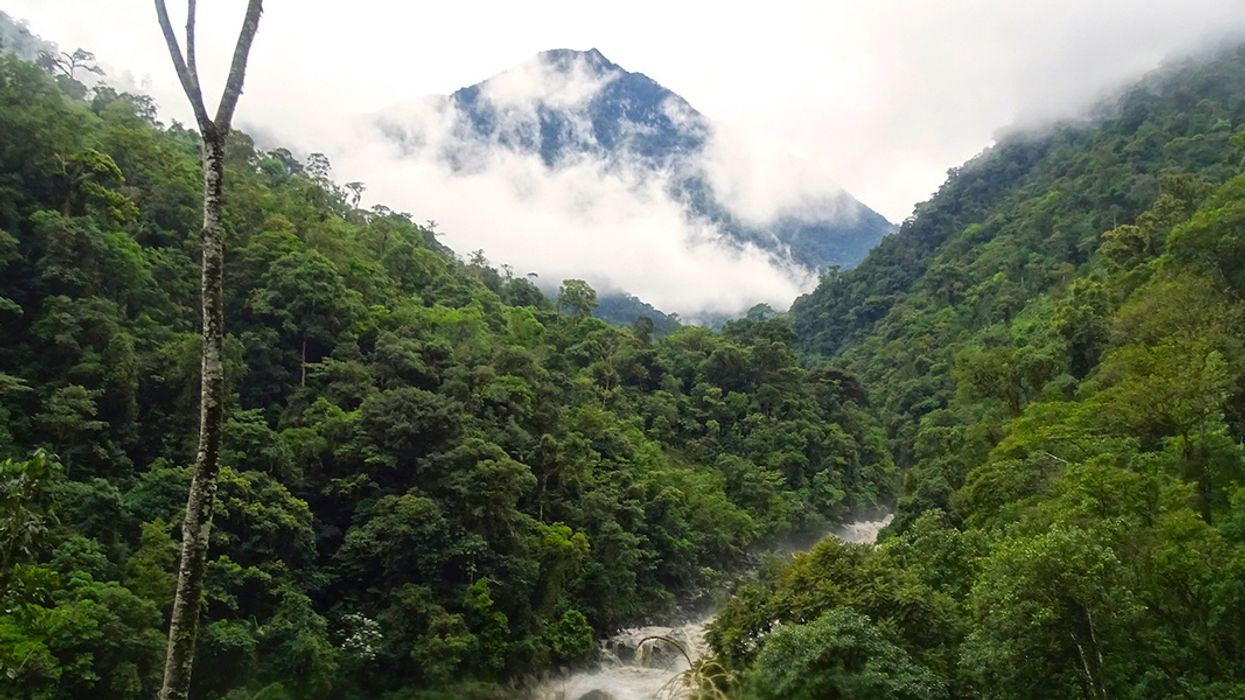 Ecuador Announces New National Park in the Andes