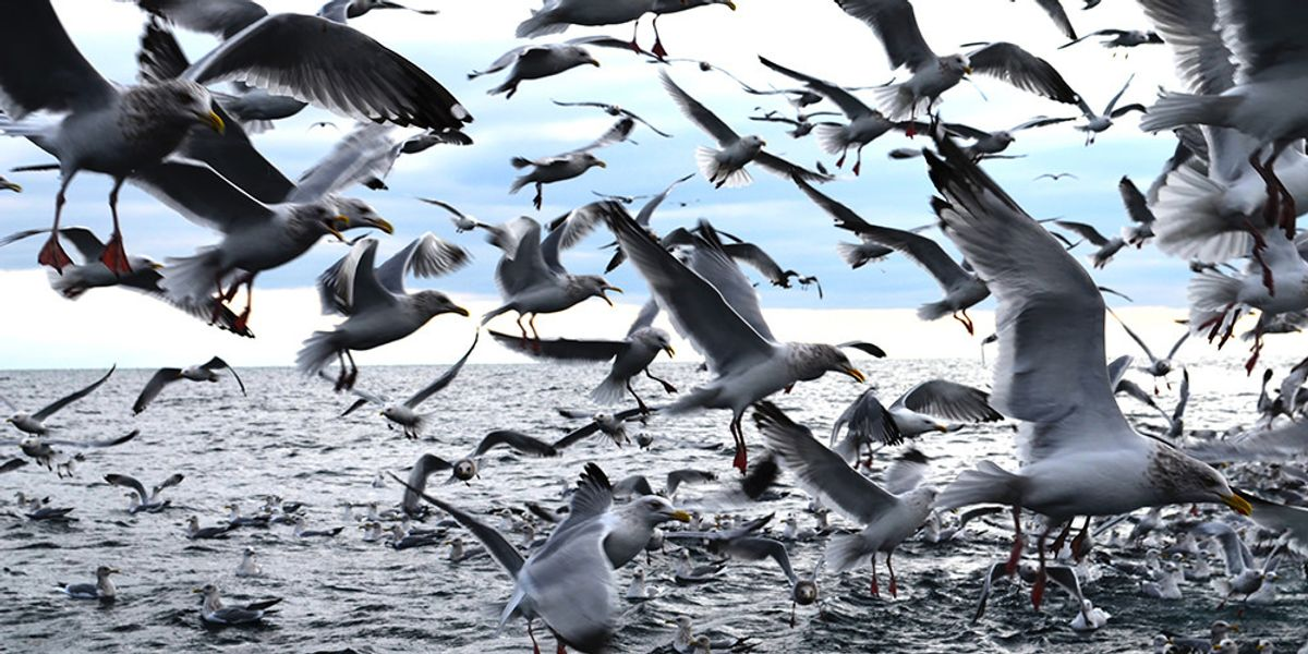 After decades of decreases, mercury rises in Great Lakes wildlife.
