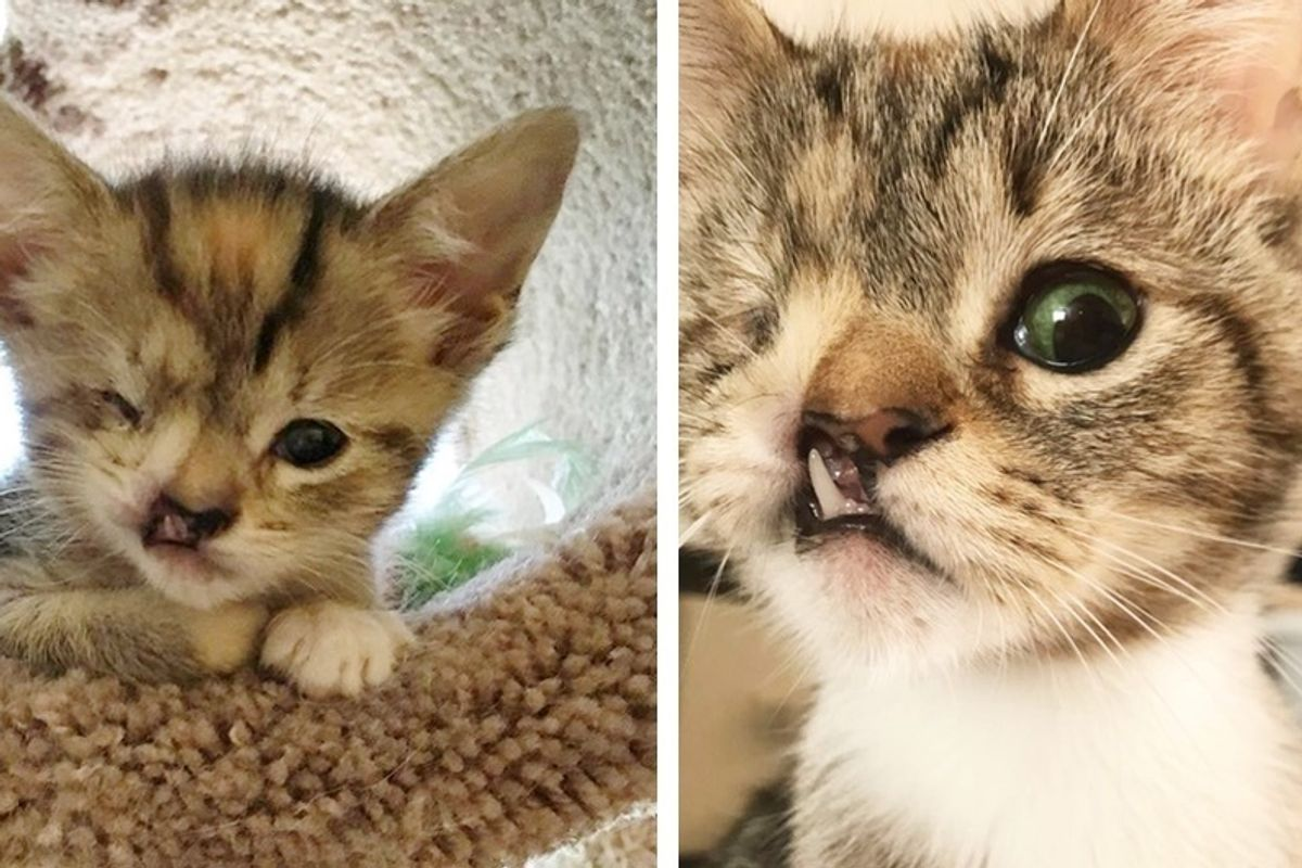 """Couple Gives One-eyed Kitten with Snaggletooth a Chance While Others Say It Isn't """"Worth It""""."""