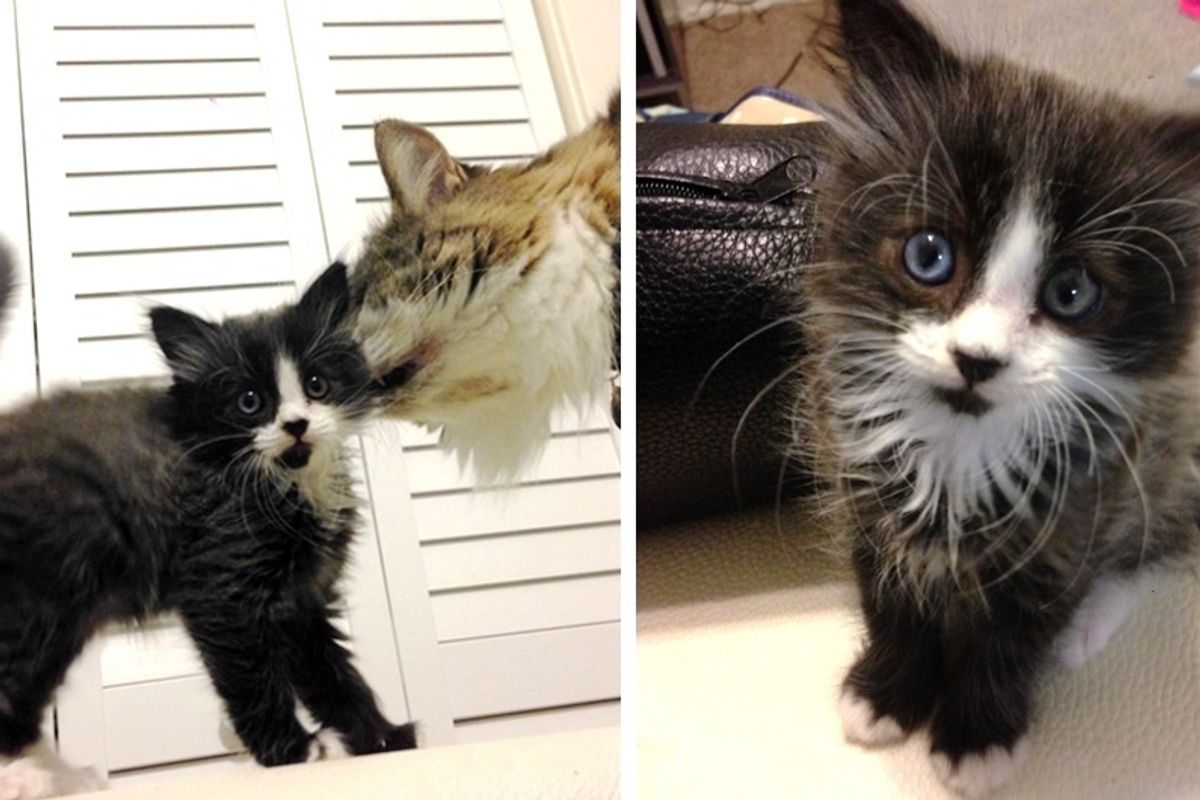Scaredy Motherless Kitten Has His Life Turned Around With Help From a Furry Crew.
