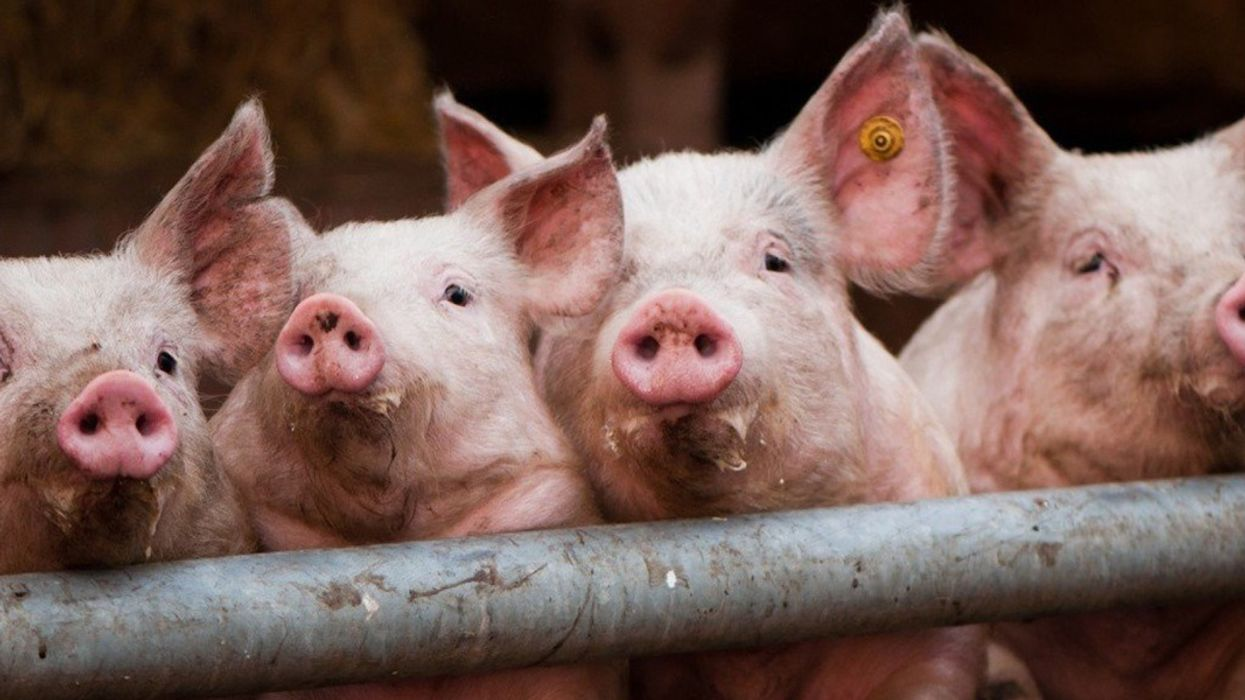 50+ Groups Back Landmark Effort to Halt 'Out of Control' Factory Farming in Iowa
